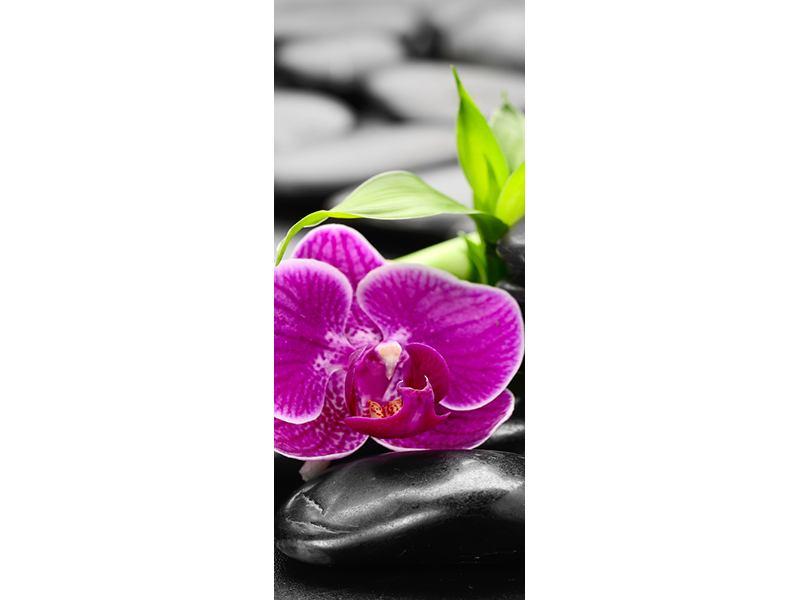 Türtapete Feng-Shui-Orchidee