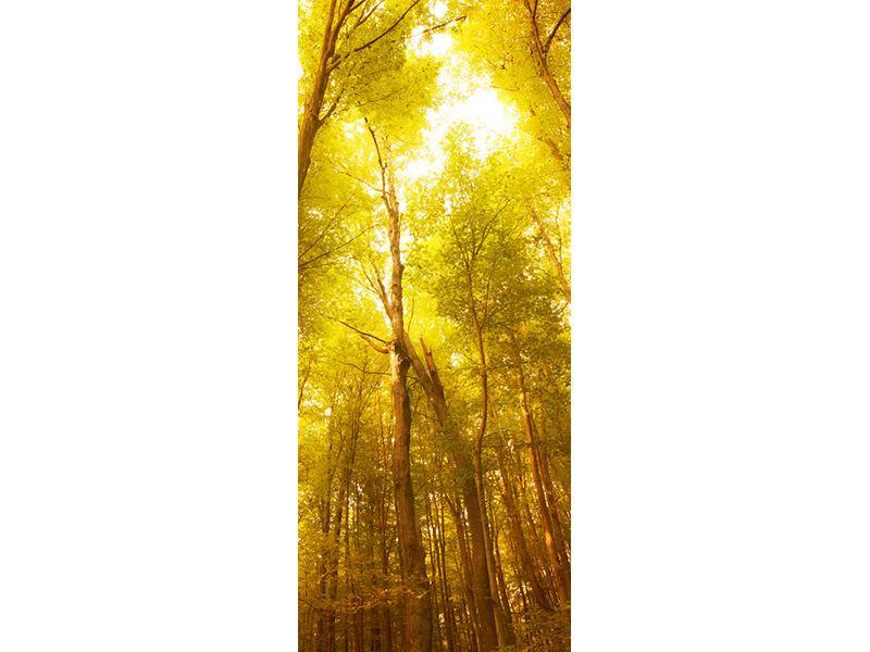 Türtapete Herbstwald