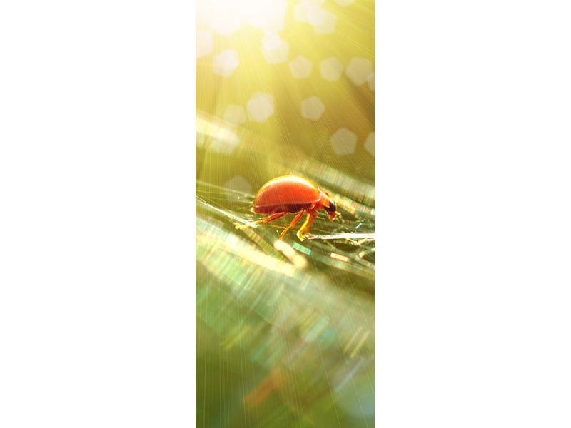 Türtapete Marienkäfer im Sonnenlicht