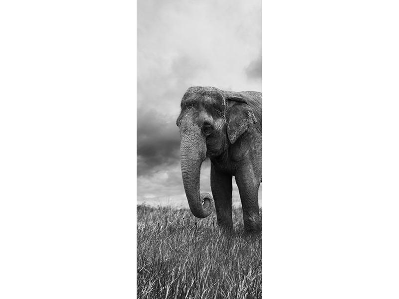 Türtapete Elefant