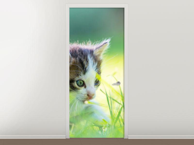 Türtapete Kitten