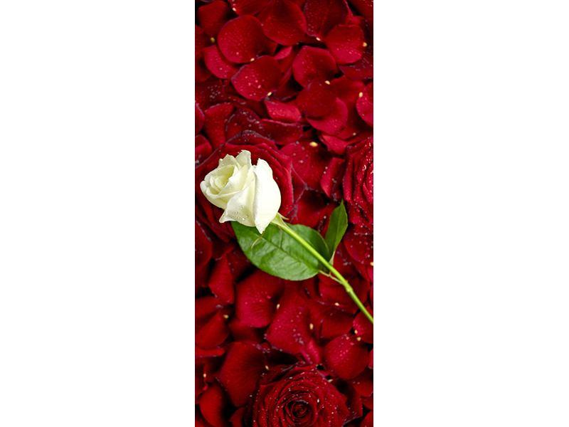 Türtapete Auf Rosen gebettet
