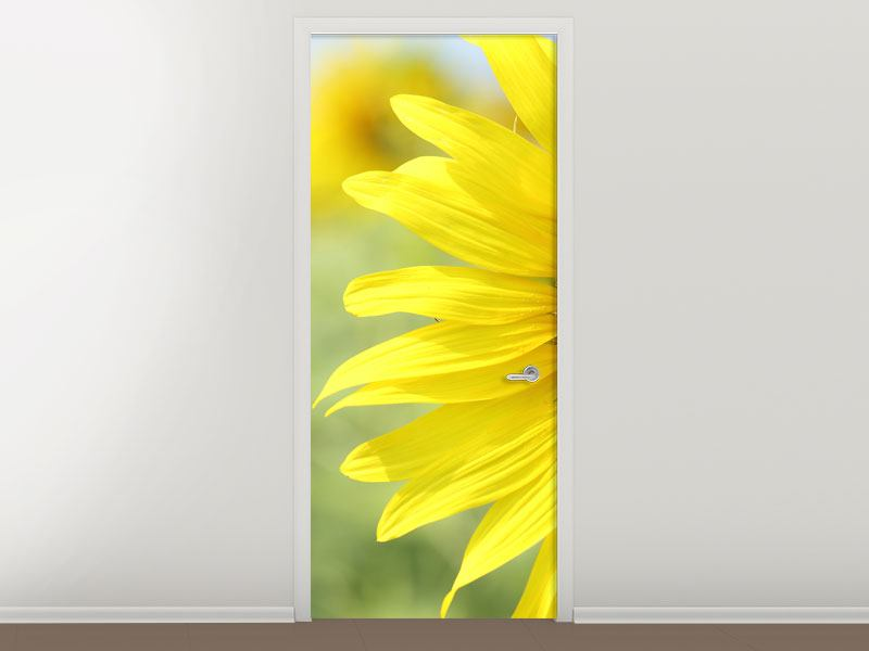 Türtapete Die Blume der Sonne