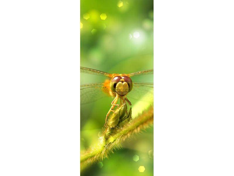 Türtapete XXL-Libelle