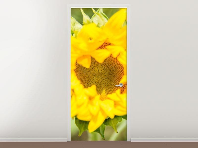 Türtapete Wilde Sonnenblume