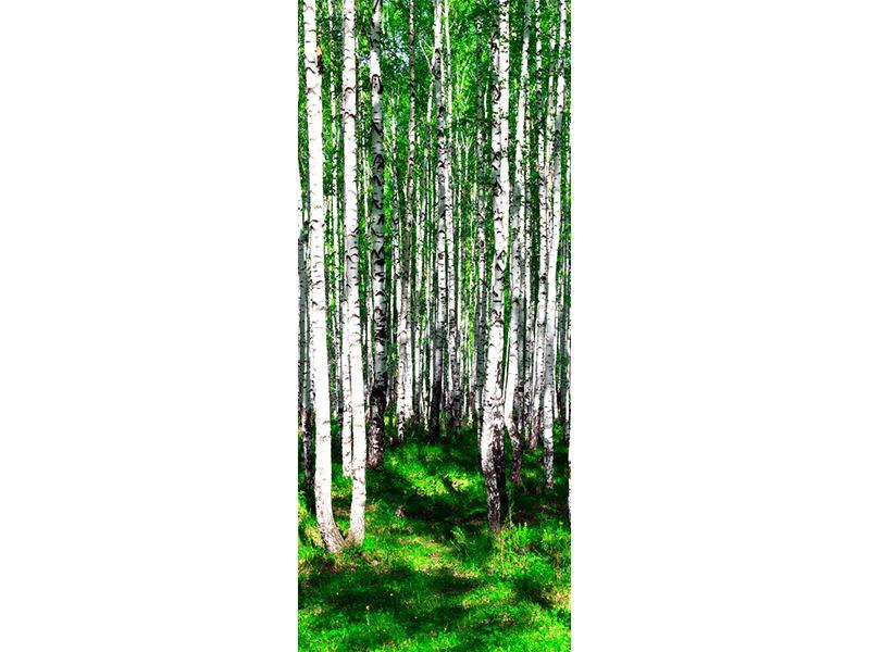 Türtapete Sommerlicher Birkenwald