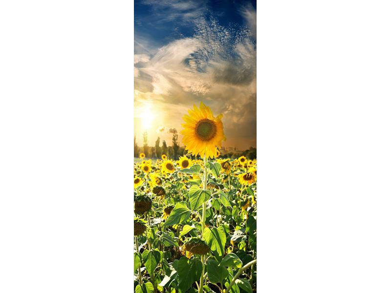 Türtapete Sonnenblumen im Sonnenuntergang