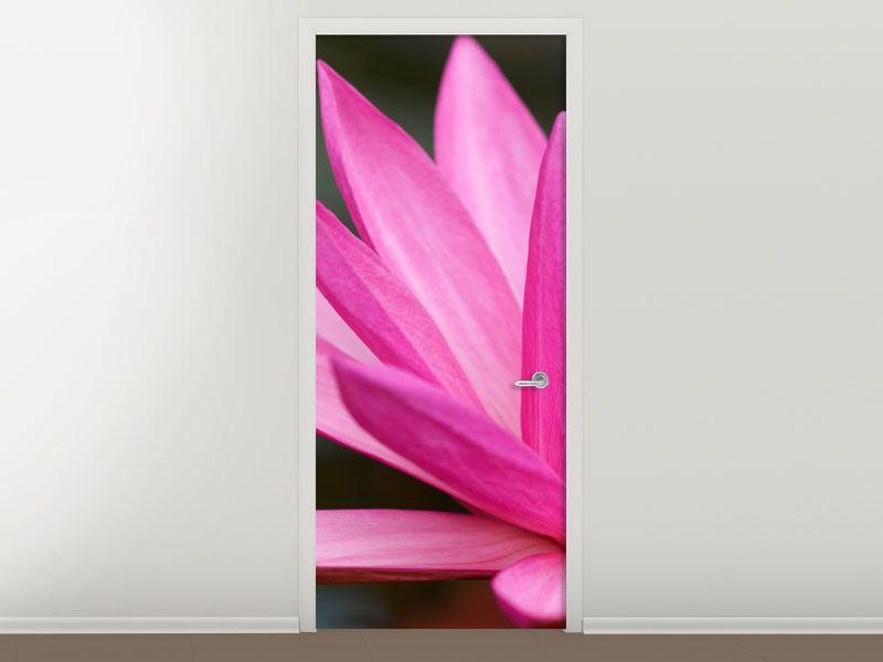 Türtapete XXL Seerose in Pink
