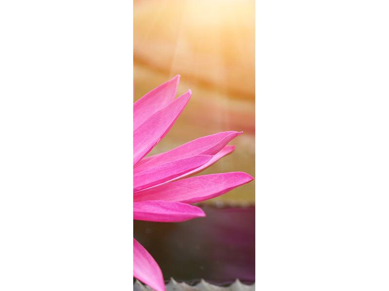Türtapete Sonnige Seerose