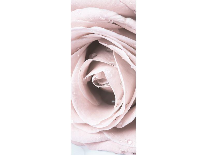 Türtapete Pastellrose