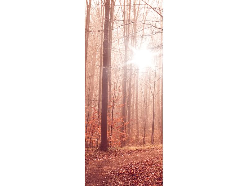 Türtapete Sonnenuntergang im Herbstwald