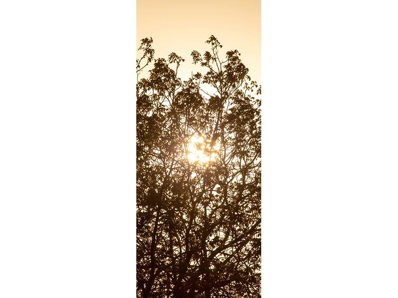 Türtapete Das Licht im Baum