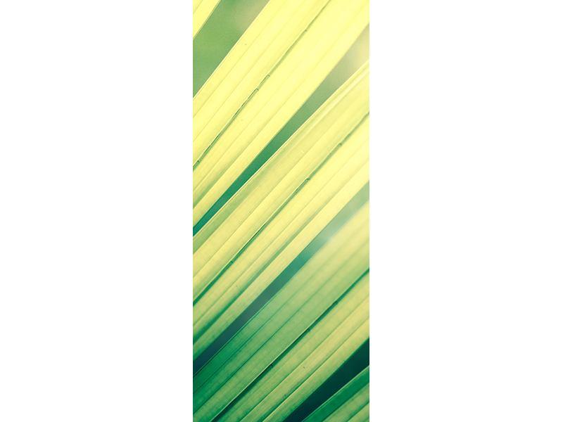 Türtapete Beleuchtetes Palmblatt