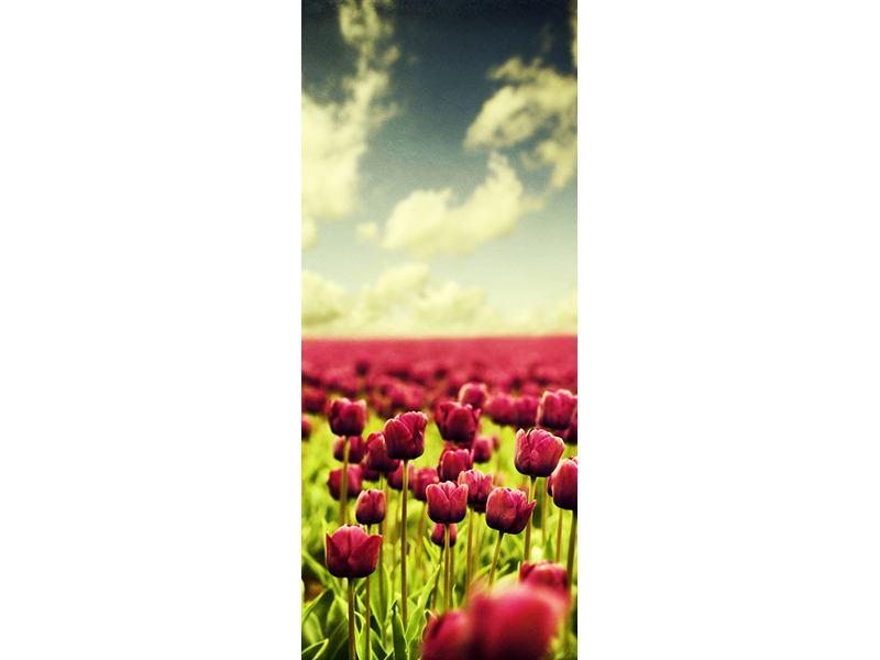 Türtapete Ein Tulpenfeld