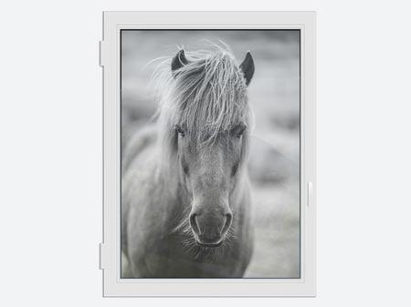 Erfreut Pferd Färbendes Bild Zeitgenössisch - Dokumentationsvorlage ...