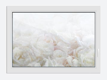 Window Print White Roses In The Morning Dew