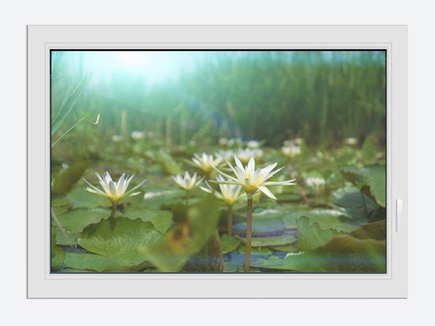 Window Print Waterlily Pond