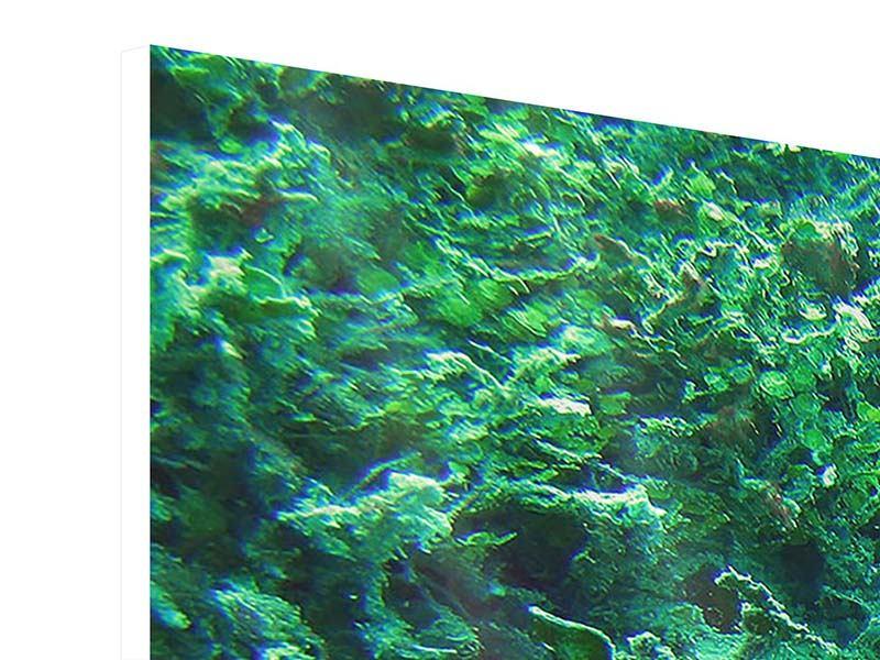 Hartschaumbild Panorama Korallen