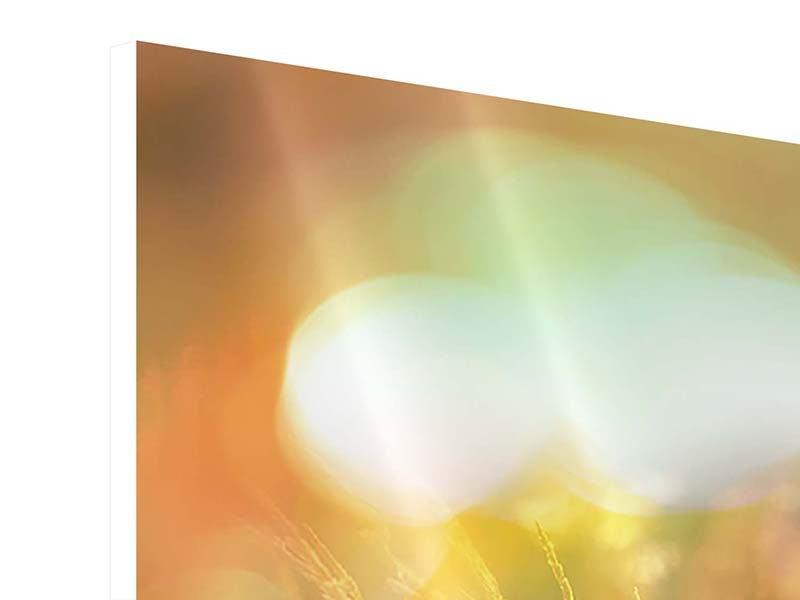 Hartschaumbild Panorama Blumenwiese in der Abenddämmerung