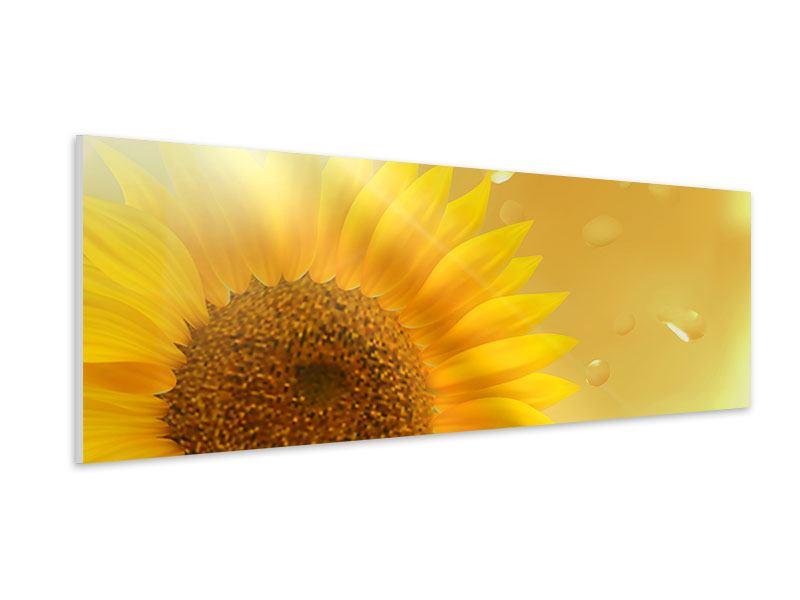 Hartschaumbild Panorama Sonnenblume im Morgentau