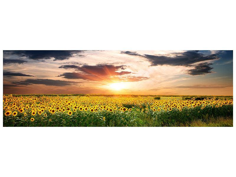 Hartschaumbild Panorama Ein Feld von Sonnenblumen