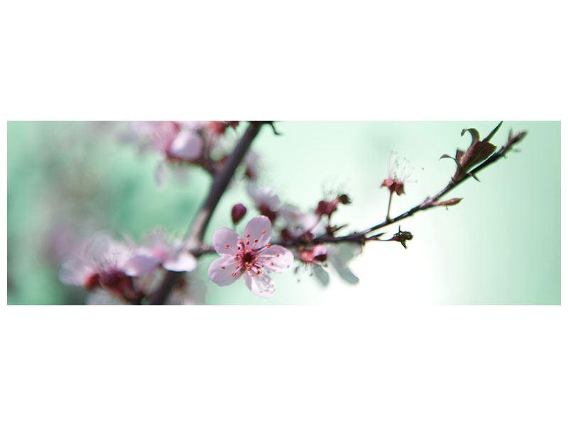 Hartschaumbild Panorama Die japanische Kirschblüte