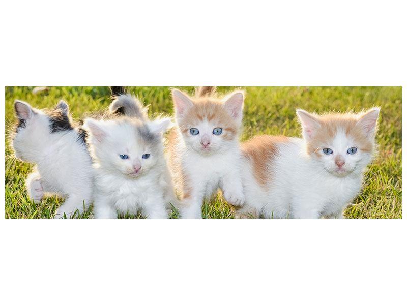 Hartschaumbild Panorama Katzenbabys