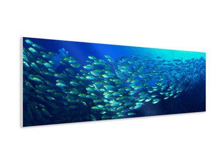 Hartschaumbild Panorama Fischschwarm