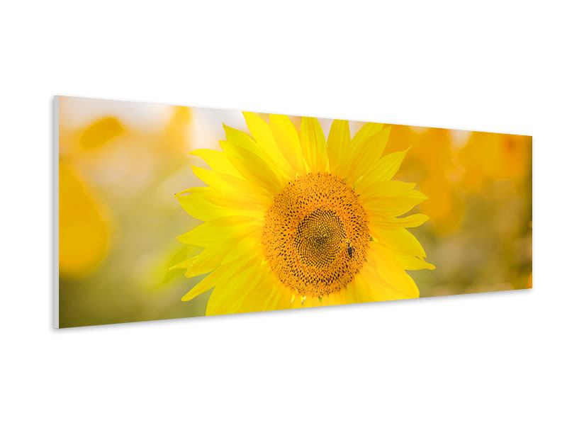 Hartschaumbild Panorama Sunflower