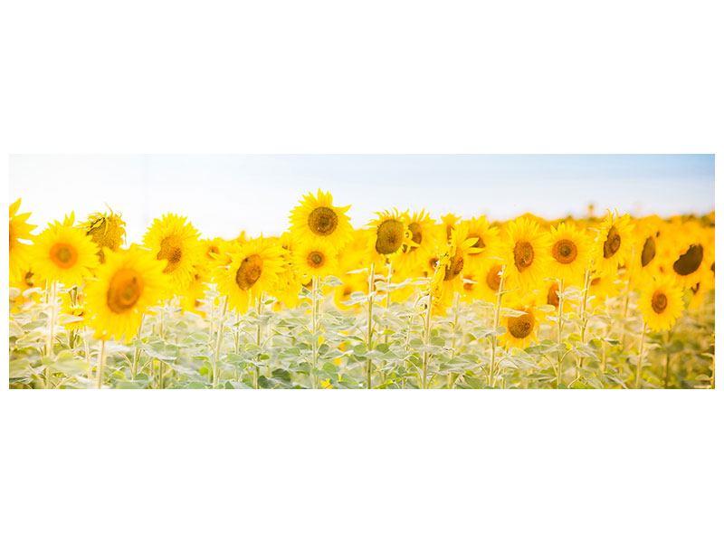 Hartschaumbild Panorama Im Sonnenblumenfeld