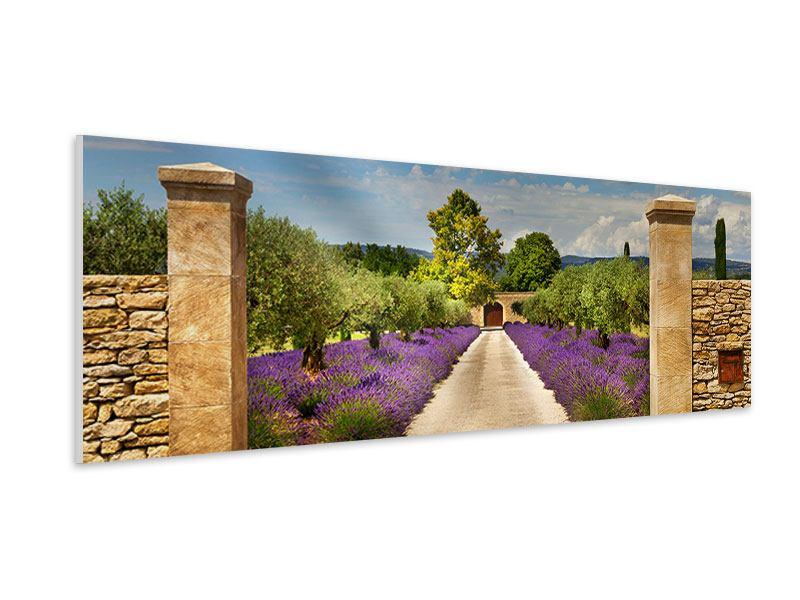 Hartschaumbild Panorama Lavendel-Garten