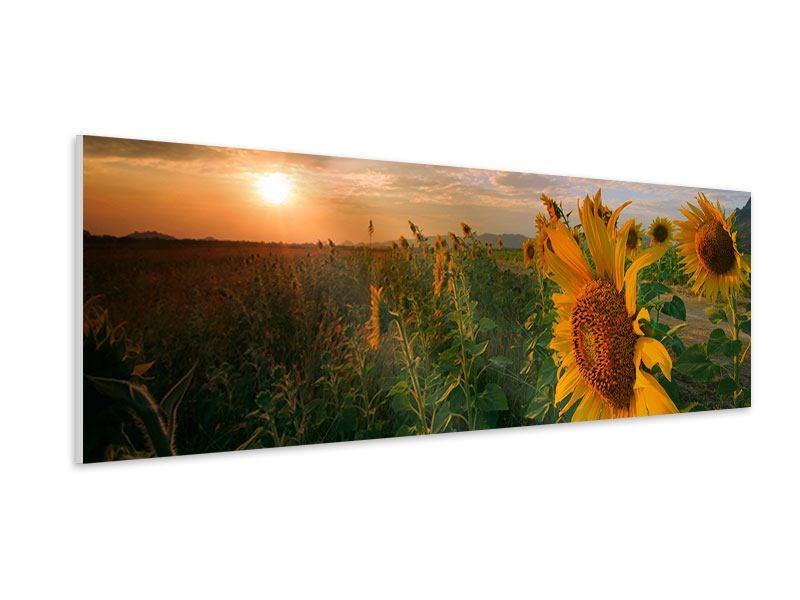Hartschaumbild Panorama Sonnenblumen im Lichtspiel