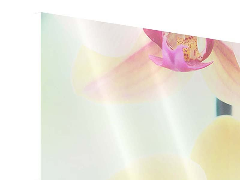 Hartschaumbild Panorama Lovely Orchidee