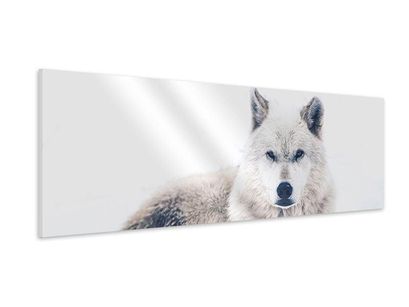 Hartschaumbild Panorama Der Wolf