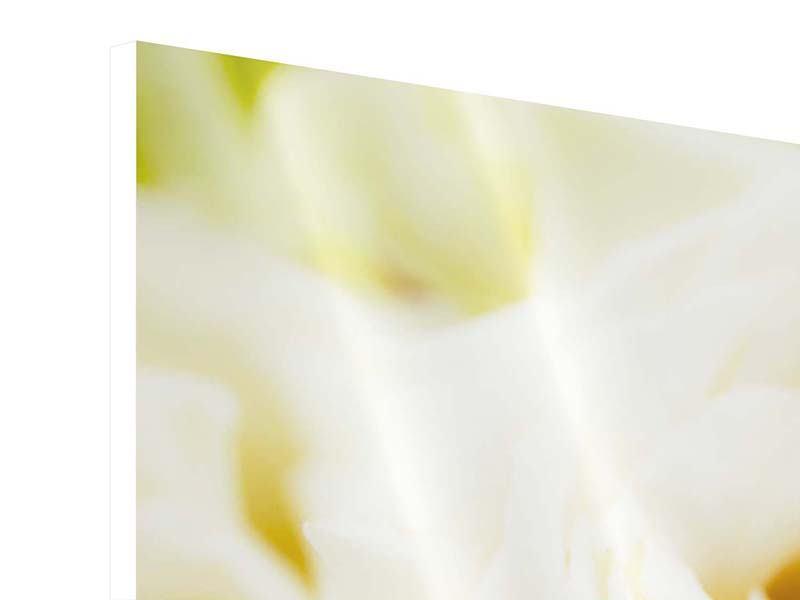 Hartschaumbild Panorama Trauringe auf Rosen gebettet
