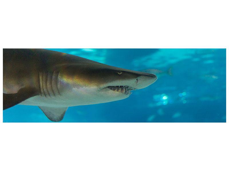 Hartschaumbild Panorama Der Haifisch