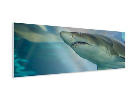 Hartschaumbild Panorama Hai