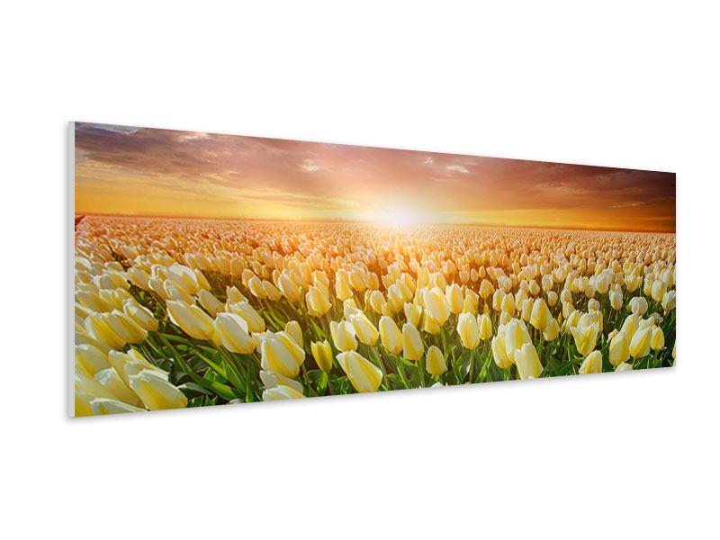 Hartschaumbild Panorama Sonnenaufgang bei den Tulpen