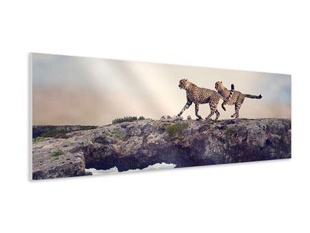 Hartschaumbild Panorama Zwei Geparden