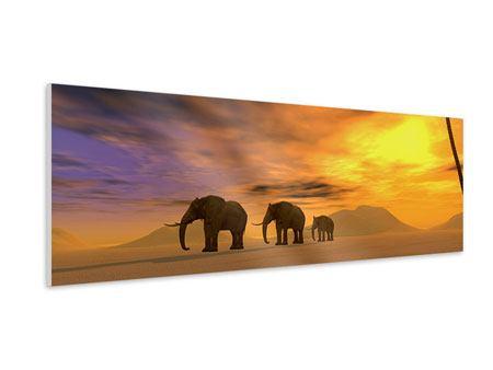 Hartschaumbild Panorama Wüstenelefanten
