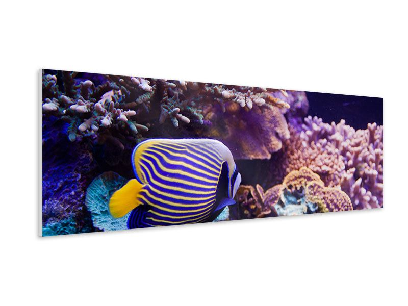 Hartschaumbild Panorama Faszination Unterwasser