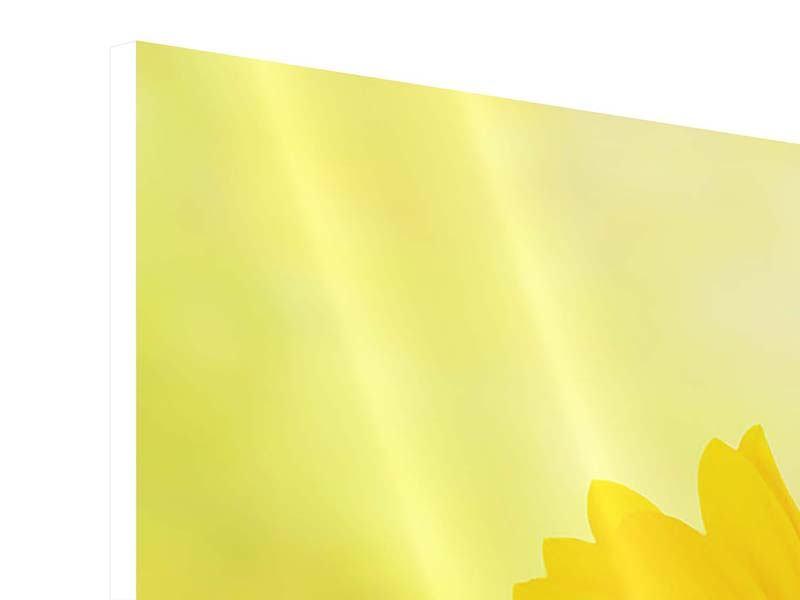 Hartschaumbild Panorama Die Sonnenblume