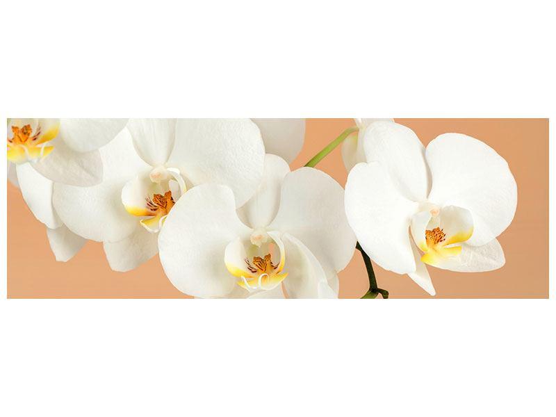 Hartschaumbild Panorama Weisse Orchideenblüten