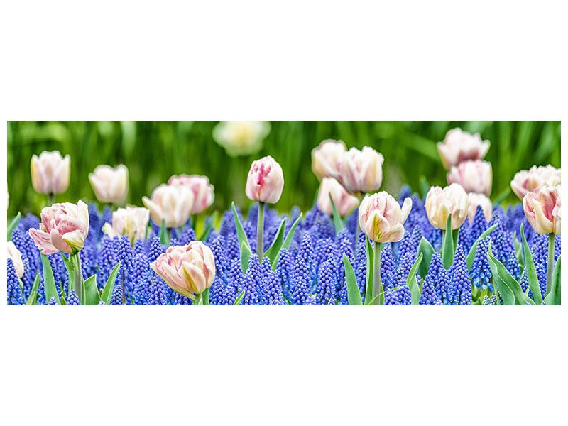 Hartschaumbild Panorama Ein Garten mit Tulpen