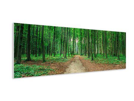 Hartschaumbild Panorama Tannenwald