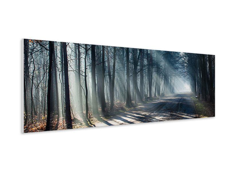 Hartschaumbild Panorama Wald im Lichtstrahl