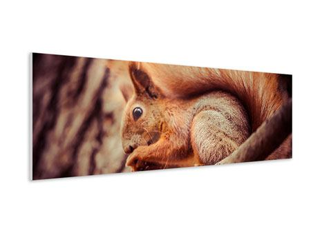 Hartschaumbild Panorama Eichhörnchen