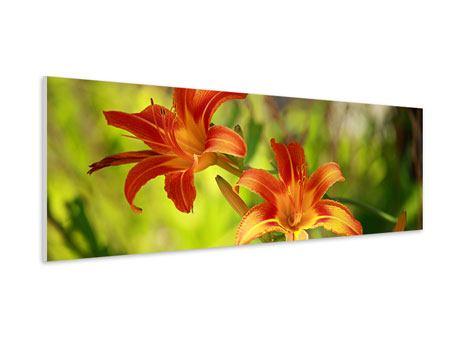 Hartschaumbild Panorama Lilien in der Natur