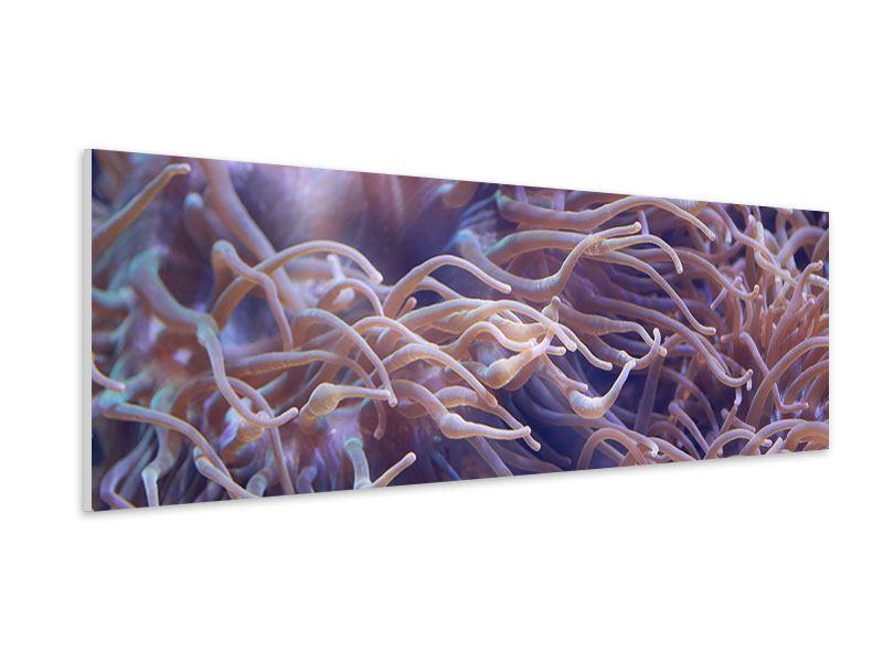Hartschaumbild Panorama Korallenriff