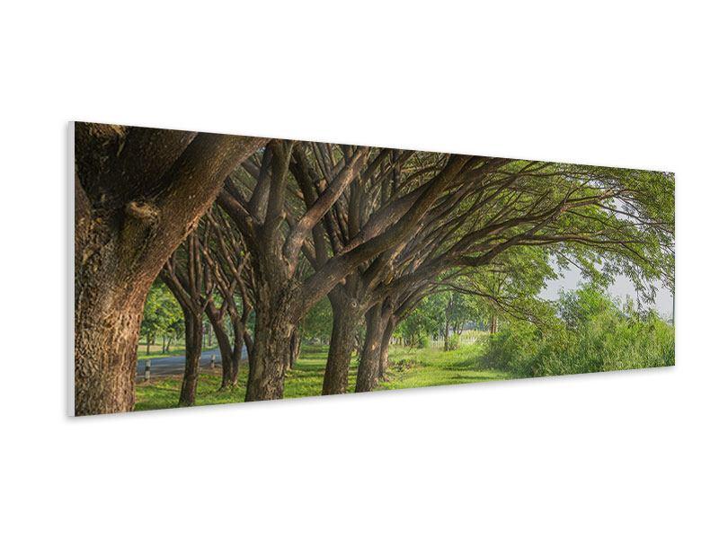 Hartschaumbild Panorama Alter Baumbestand